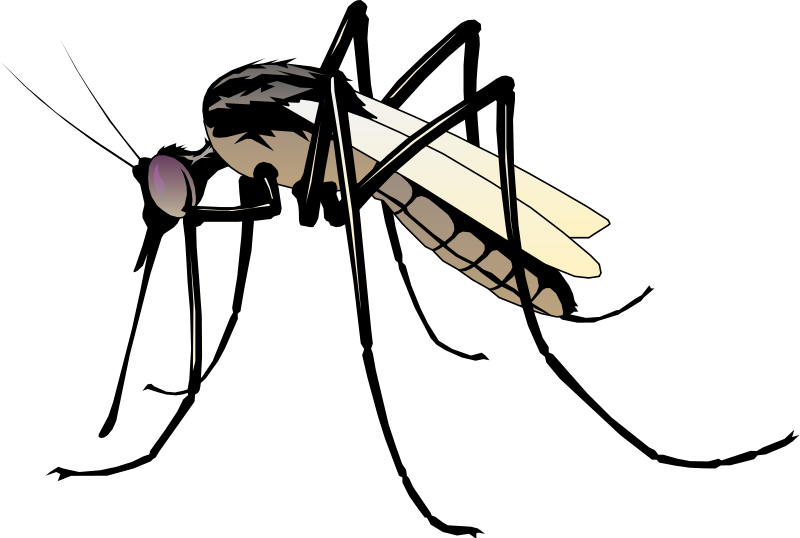 Vector insect the detail. Gardening clipart groundskeeper