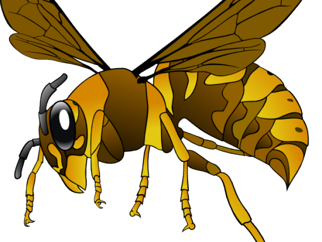 Dead clipart hornet. Collection of free shopping