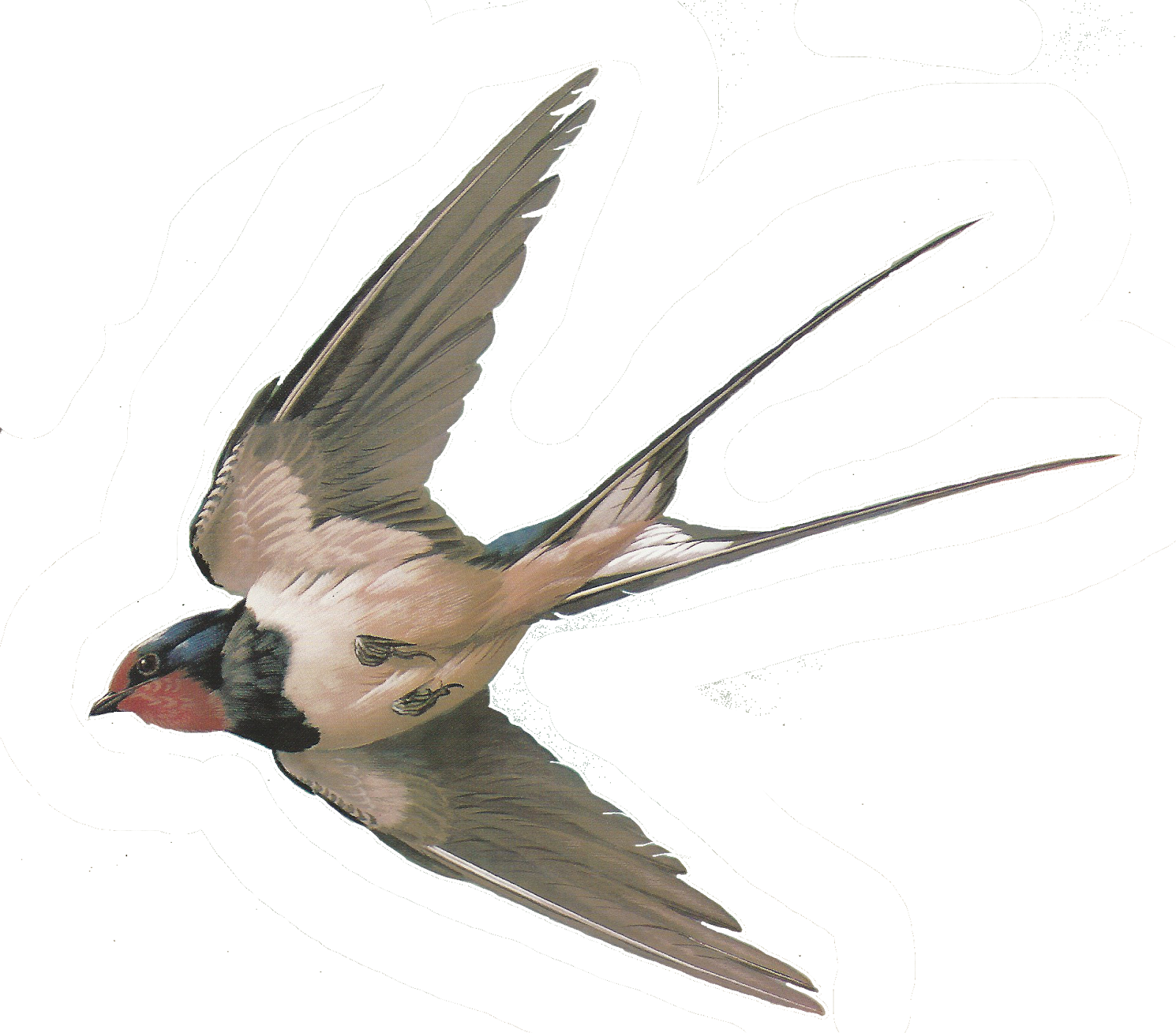 Doves clipart obituary. Free images of birds