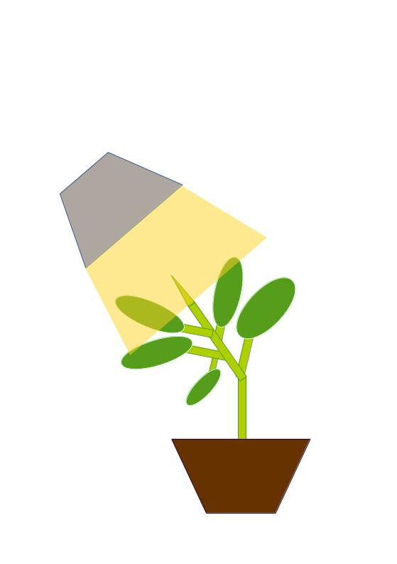 Dirt clipart terrestrial plant. Phototropism photography google search