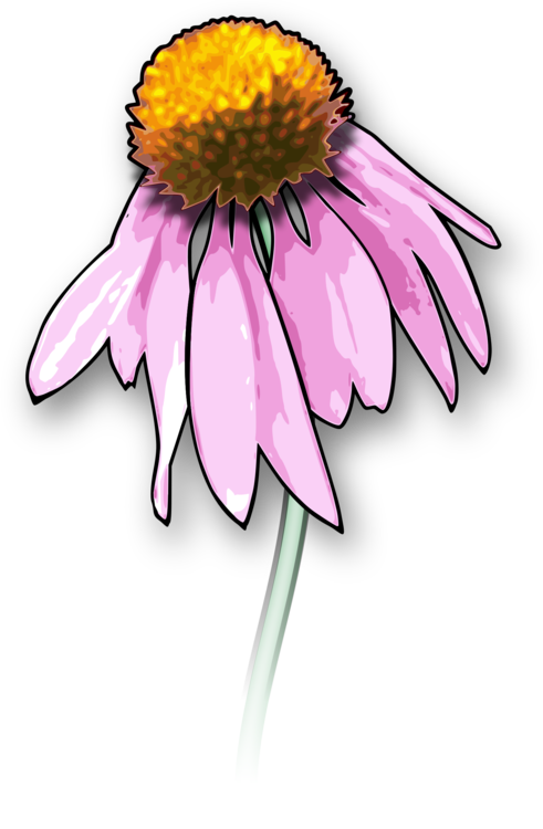 Dead flower png. Drawing death download flowers