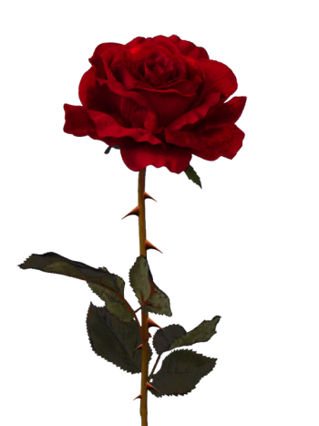 Dead flower png. Image rose animal jam