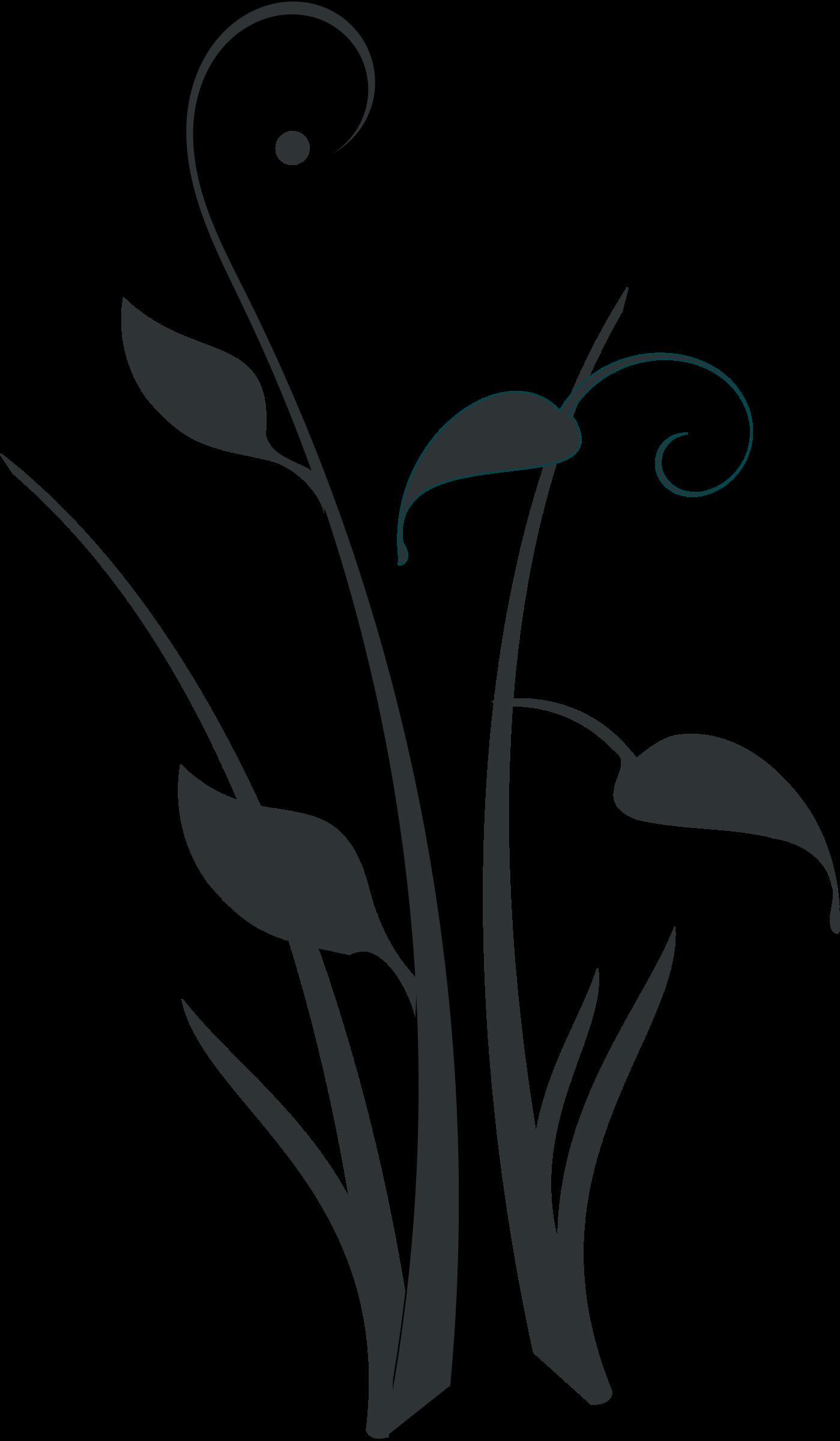 Decorative clipart vine. Form big image png