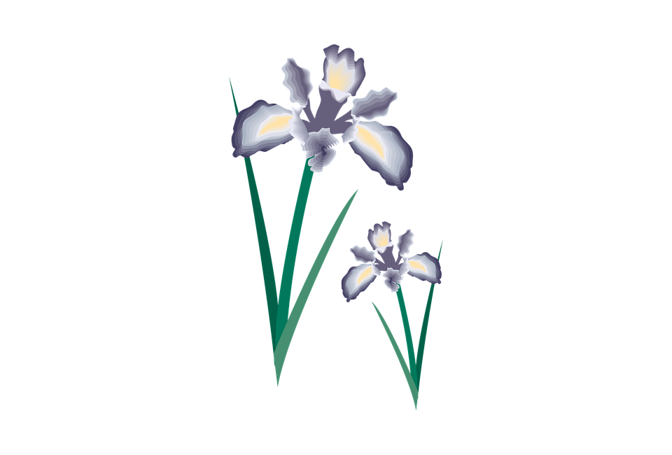 Free photo floral decoration. Flower clipart design
