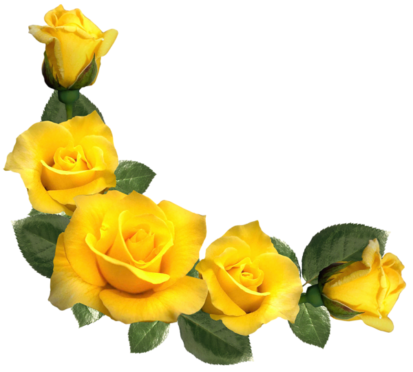 Beautiful Yellow Roses Decor PNG Clipart Image