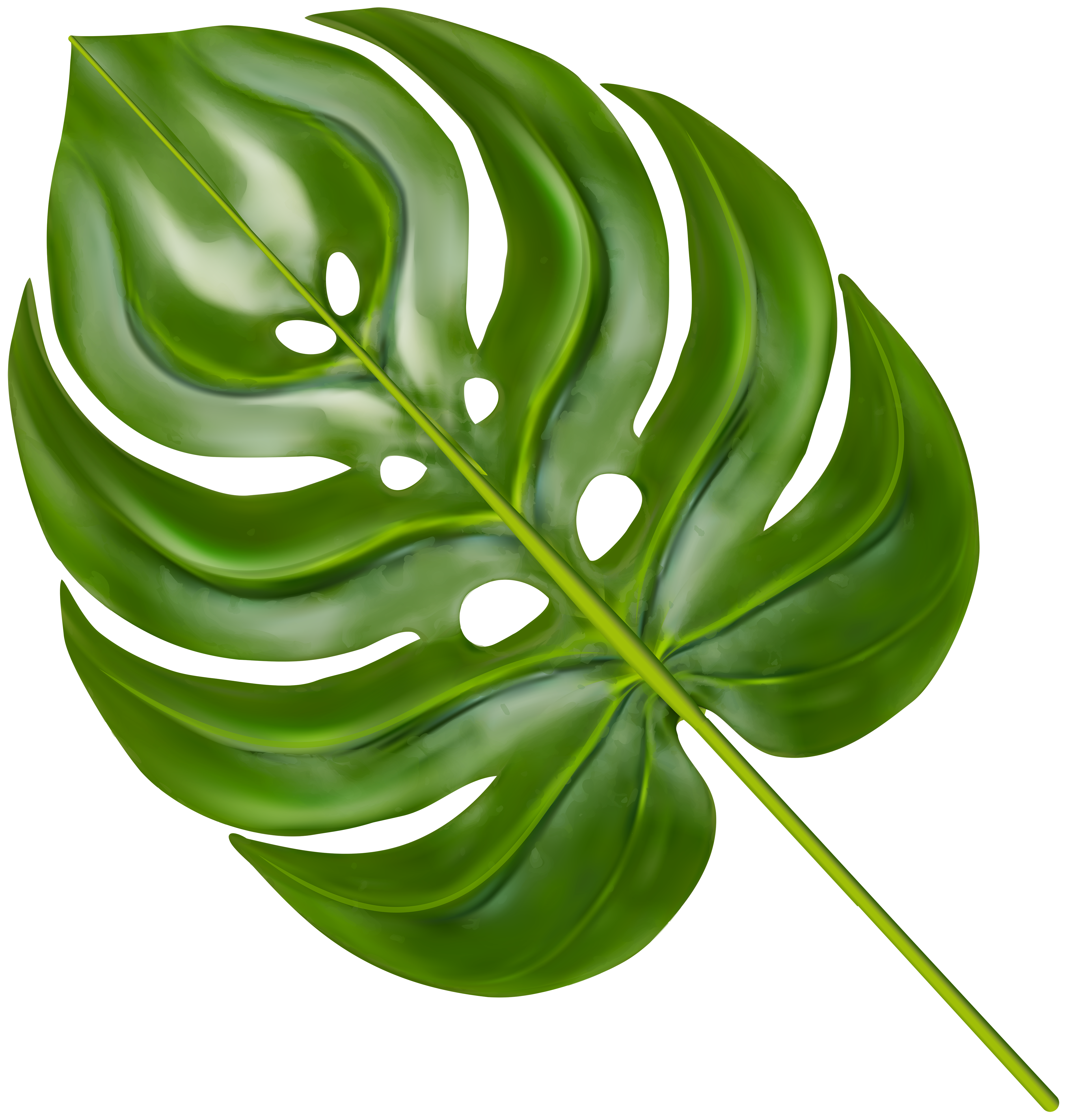 Palm clipart green branch. Decorative transparent image gallery