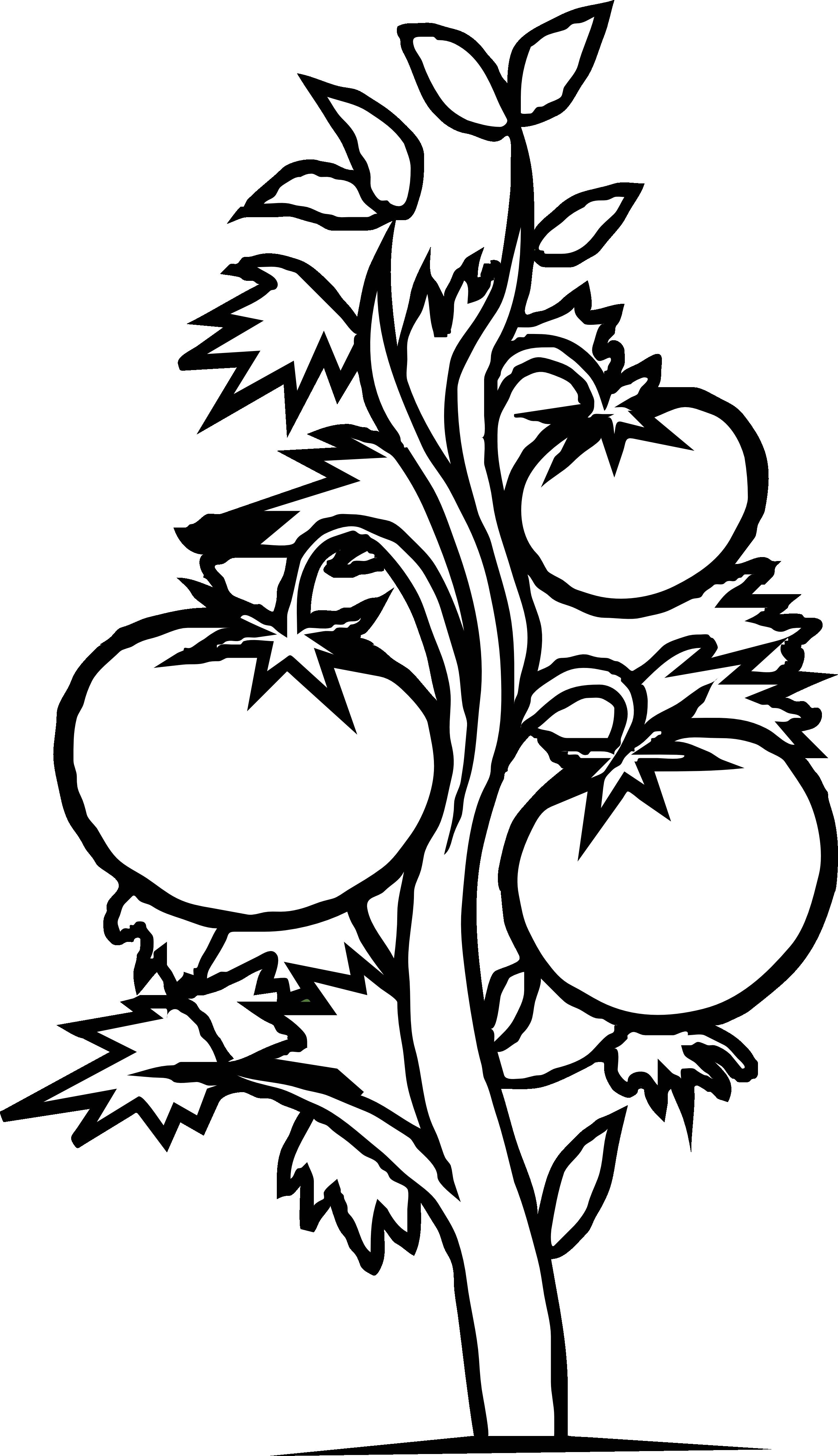 Tomato shrub clipground gabi. Zombie clipart black and white
