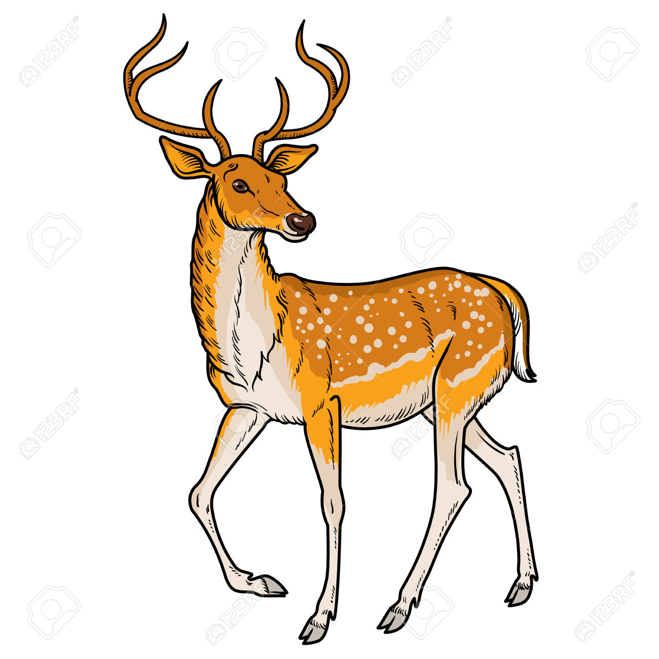 Deer realistic. Clipart transparent free for