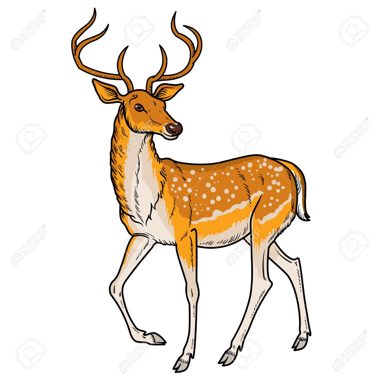 Deer clipart. Baby at getdrawings com