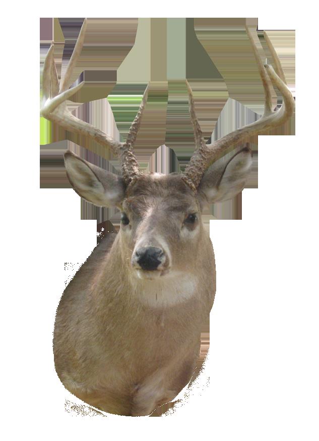 Deer clipart buck. Png images transparent free