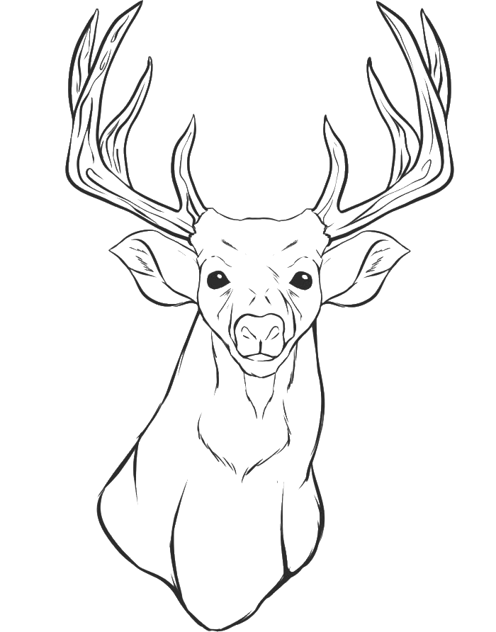 Deer Coloring Pages in 2020 | Deer coloring pages, Animal coloring ... | 892x700