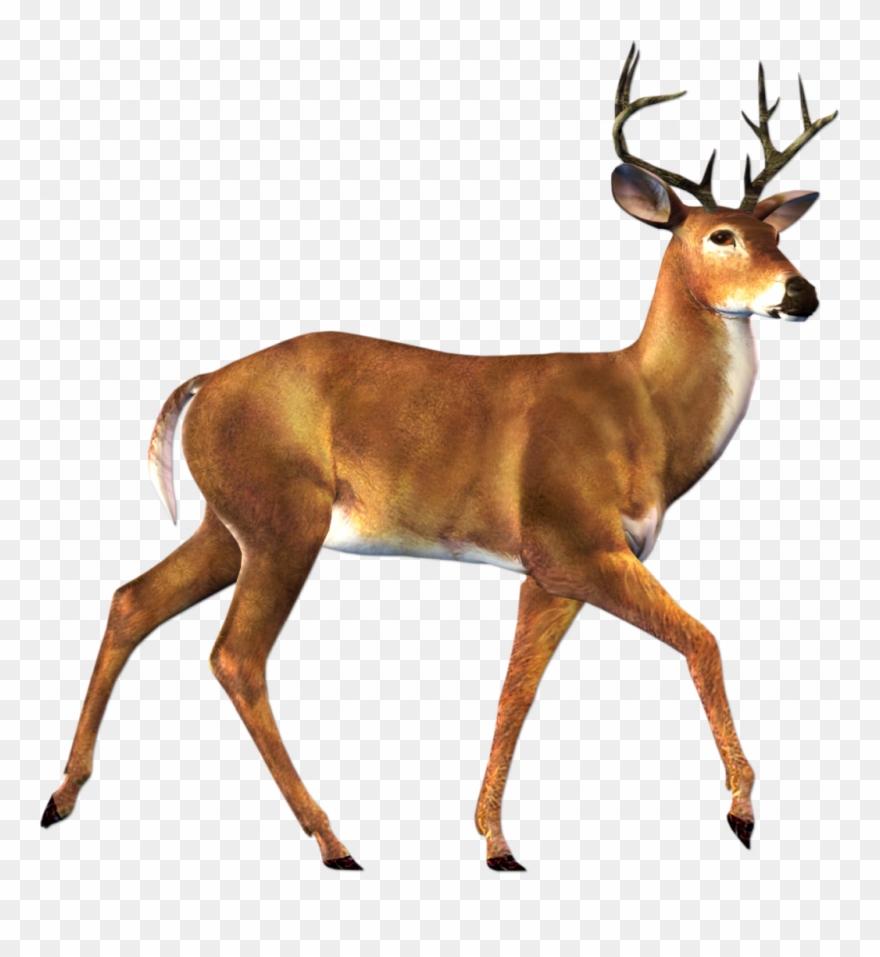 Deer clipart dear. Hd animal png transparent