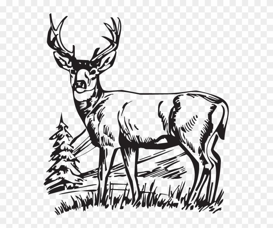 Download deer drawings white. Hunting clipart antelope head
