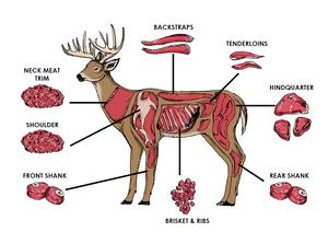 Pin on cuts . Deer clipart deer meat