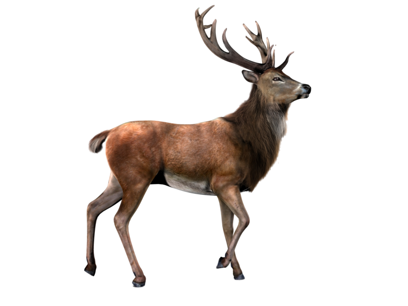 Png images free download. Hunting clipart deer herd