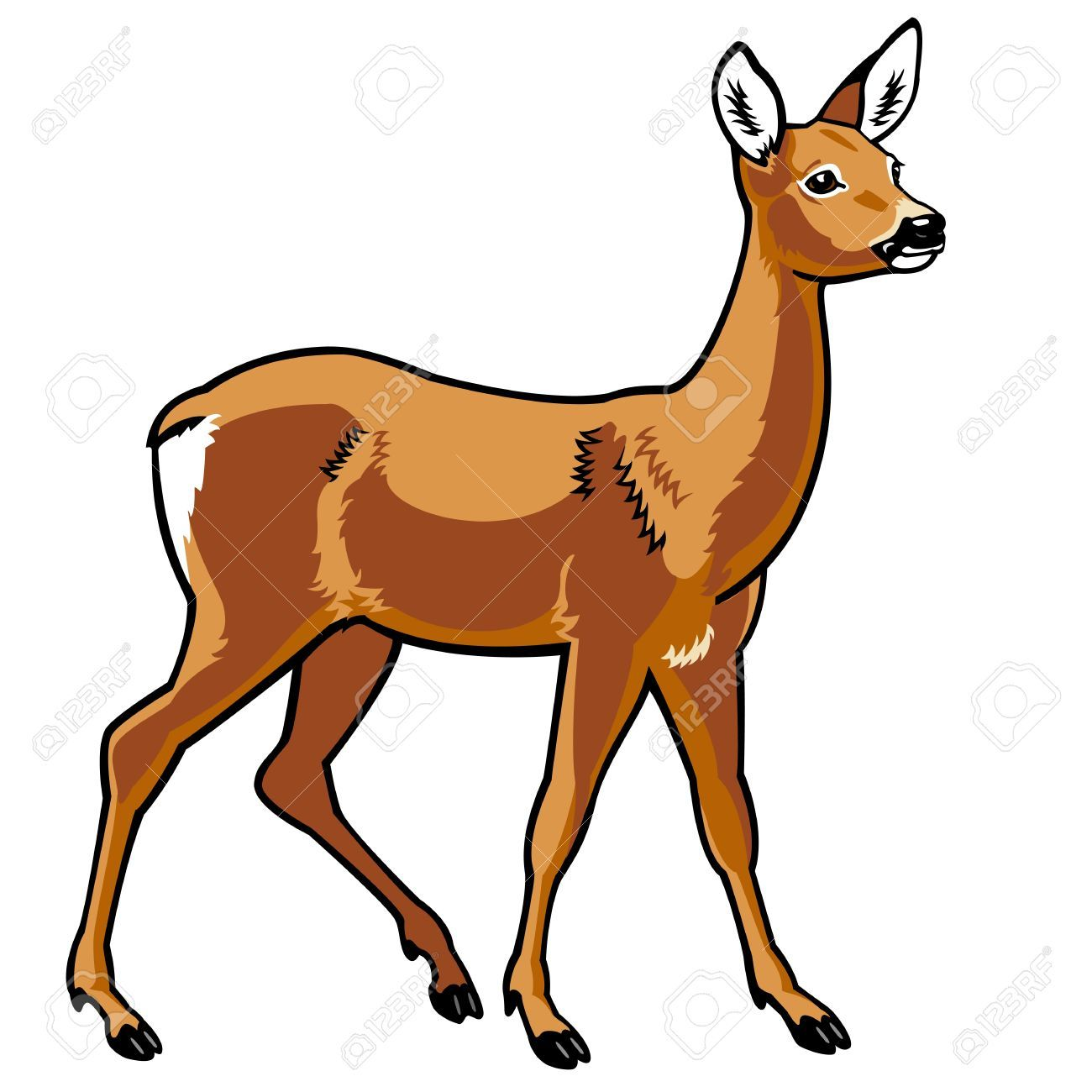 Roe side view picture. Deer clipart female deer