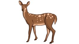 Download drawing white tailed. Deer clipart female deer