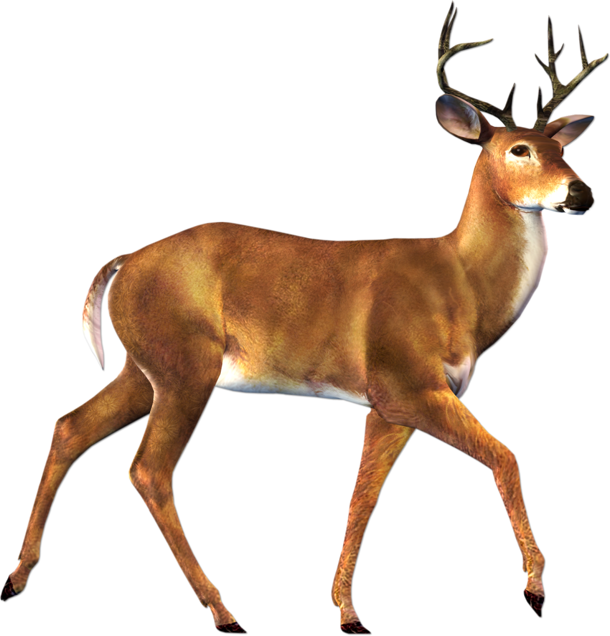 Deer clipart female deer. Impala at getdrawings com