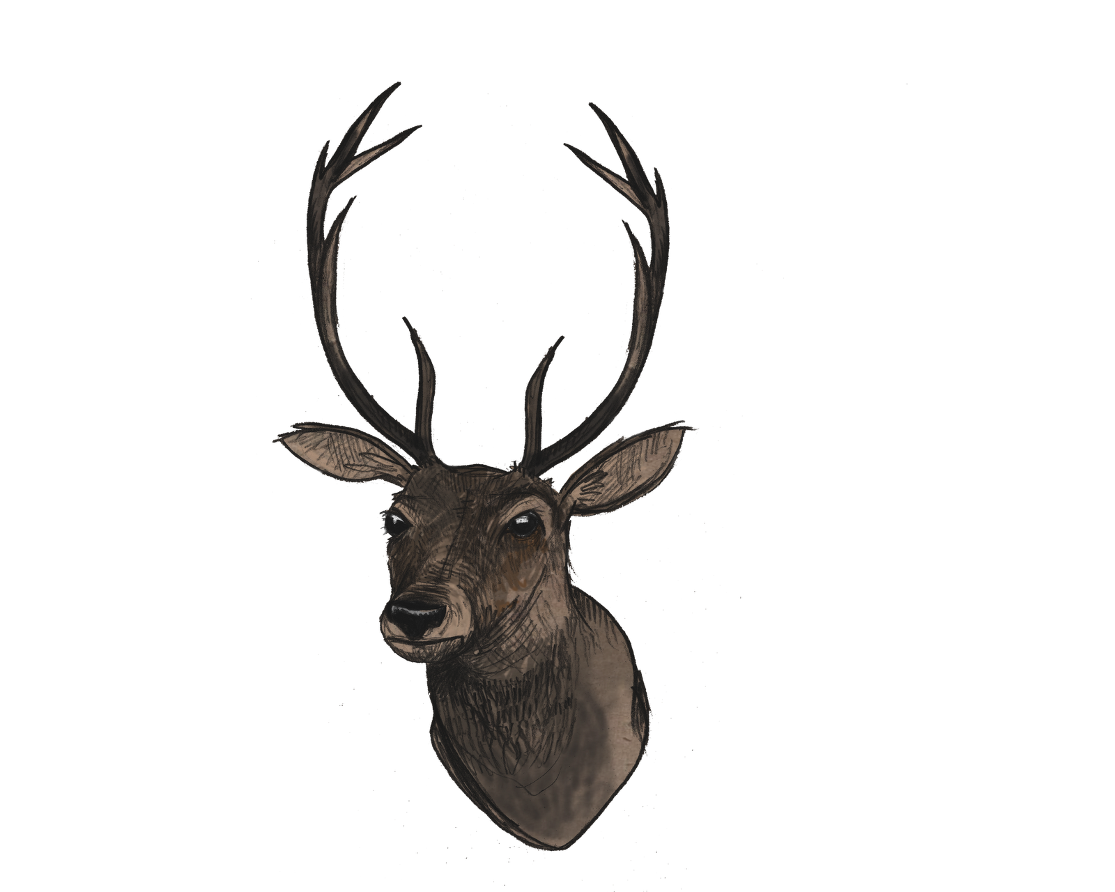 Png images transparent free. Deer clipart file