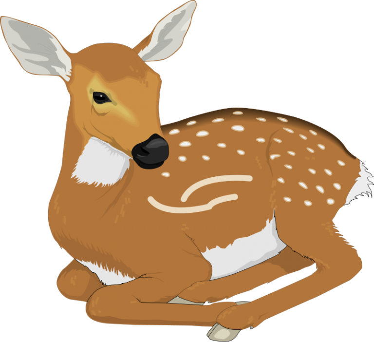 Free clip art royalty. Deer clipart file