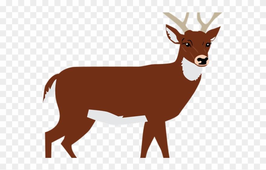 Transparent png . Deer clipart forest deer