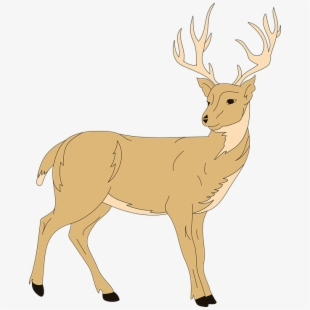 Deer clipart forest deer. Animal fur antlers wildlife