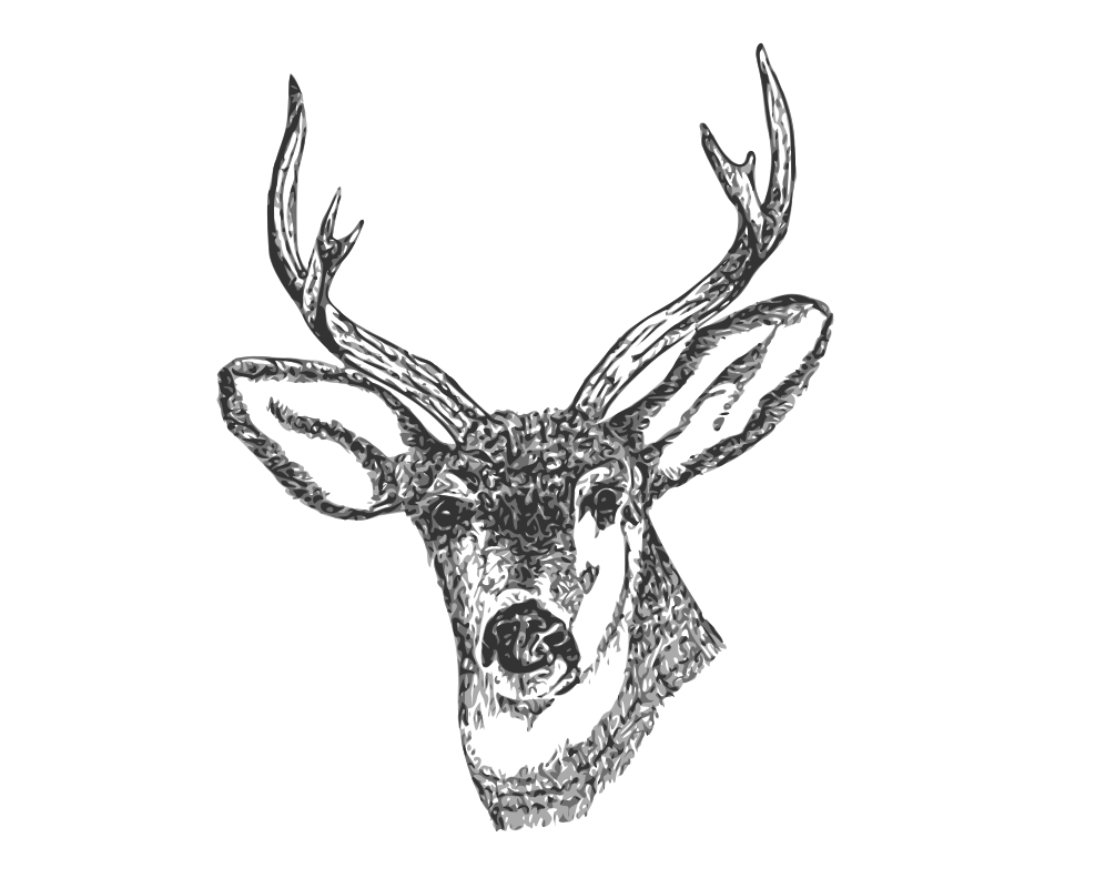 Hunting clipart deer bust. Head drawing tumblr at