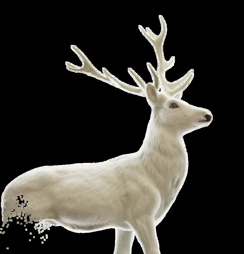 Elk clipart male deer. Png images bulk collection