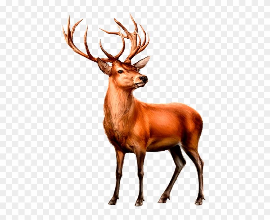 Deer clipart mule deer. Paint shop clip art