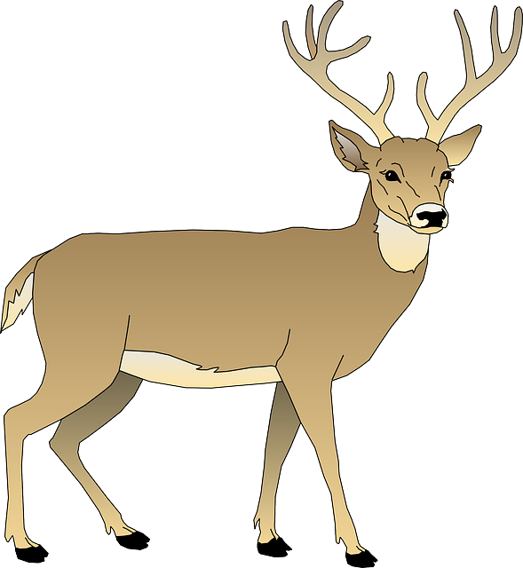 The drainage basin system. Deer clipart rain