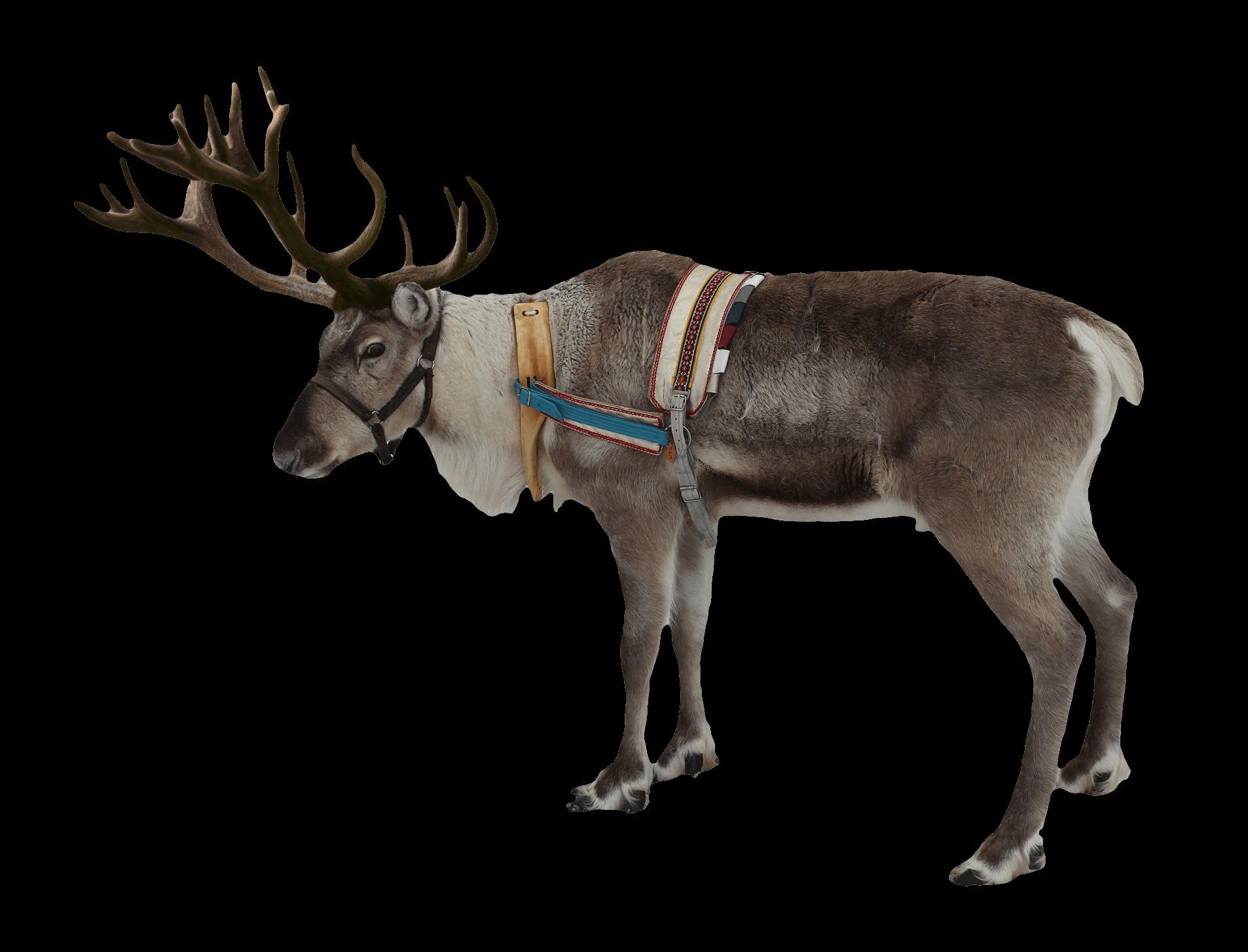 Deer clipart rain. Reindeer christmas transparent png