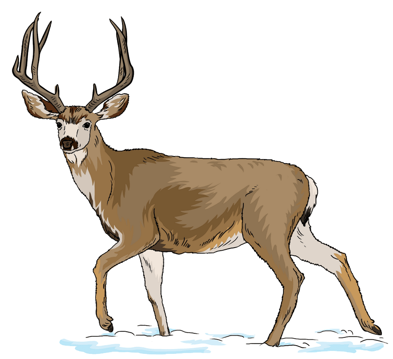 Mule free download creazilla. Deer clipart real deer