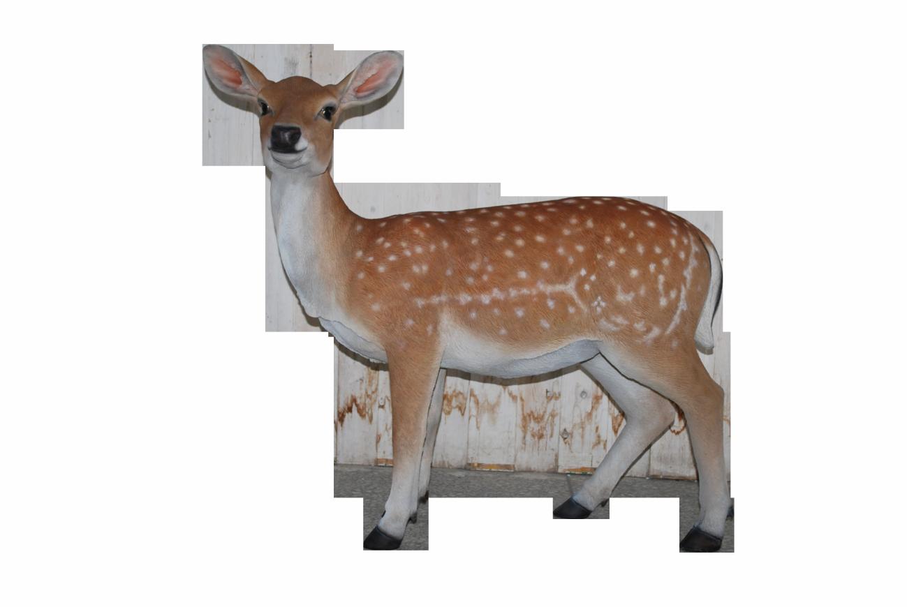 Free png download clip. Deer clipart real deer