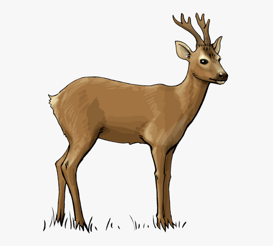 Clip art cliparts cartoons. Deer clipart roe deer