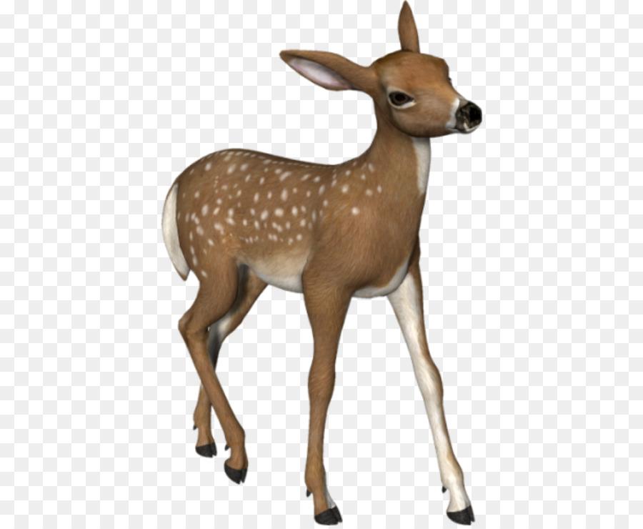 Fawn png download free. Deer clipart roe deer