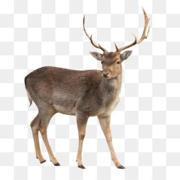 Deer clipart sambar deer. Png and transparent free