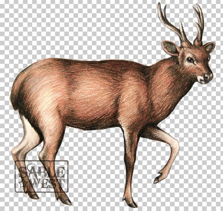 Elk javan rusa moose. Hunting clipart sambar deer