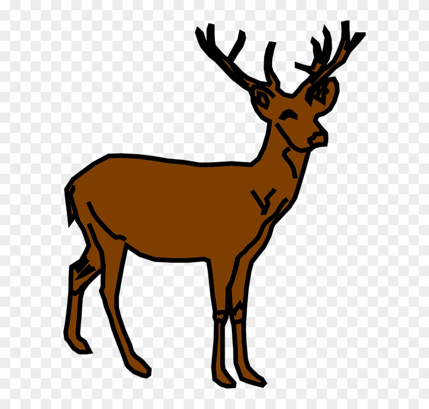 Stag rusa free transparent. Deer clipart small deer