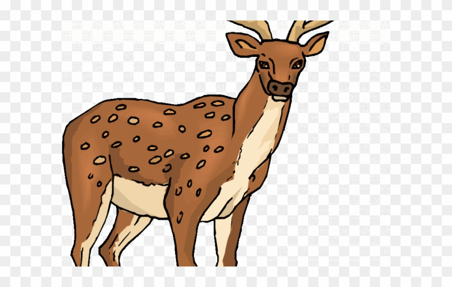 Png download . Deer clipart spotted deer