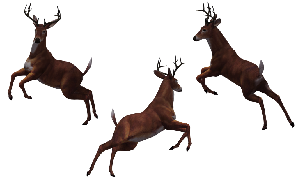 Deer png transparent images. Hunting clipart whitetail buck