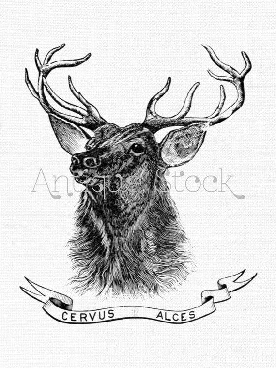 Deer clipart wapiti. Cervus alces antique elk