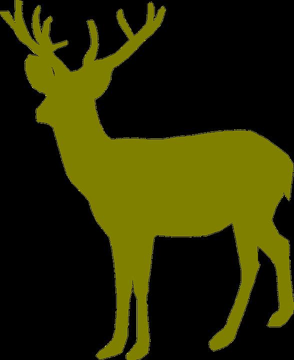 Graphics backgrounds beautiful pictures. Deer clipart watercolor