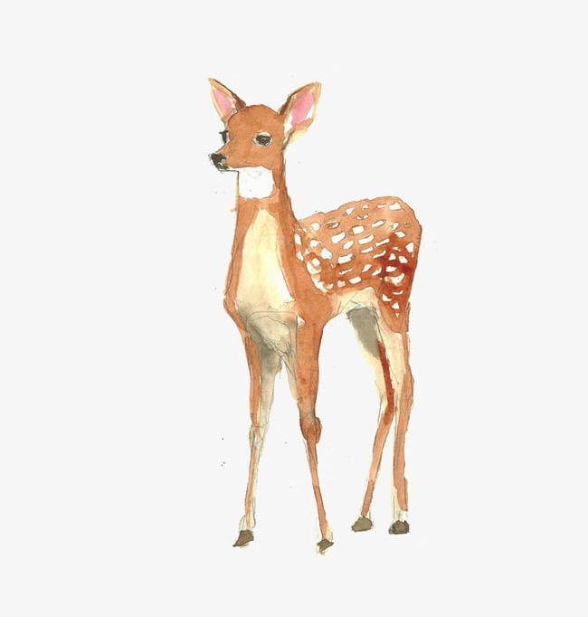 Png animal . Deer clipart watercolor