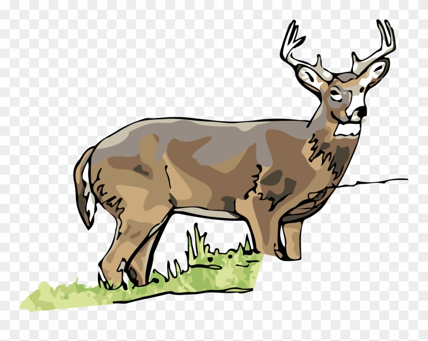 Illinois state png . Deer clipart white tailed deer