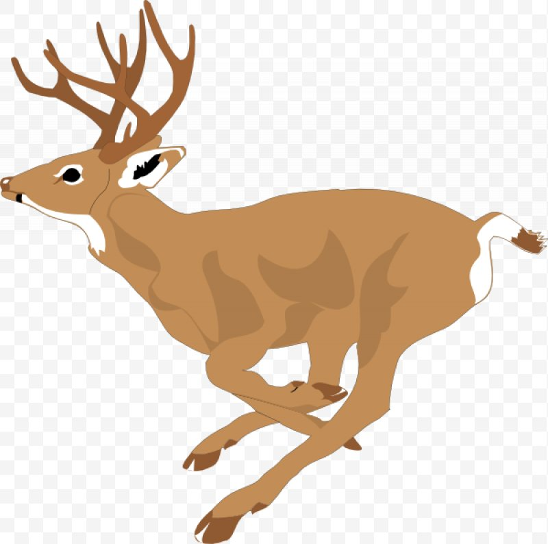 Clip art png x. Deer clipart white tailed deer