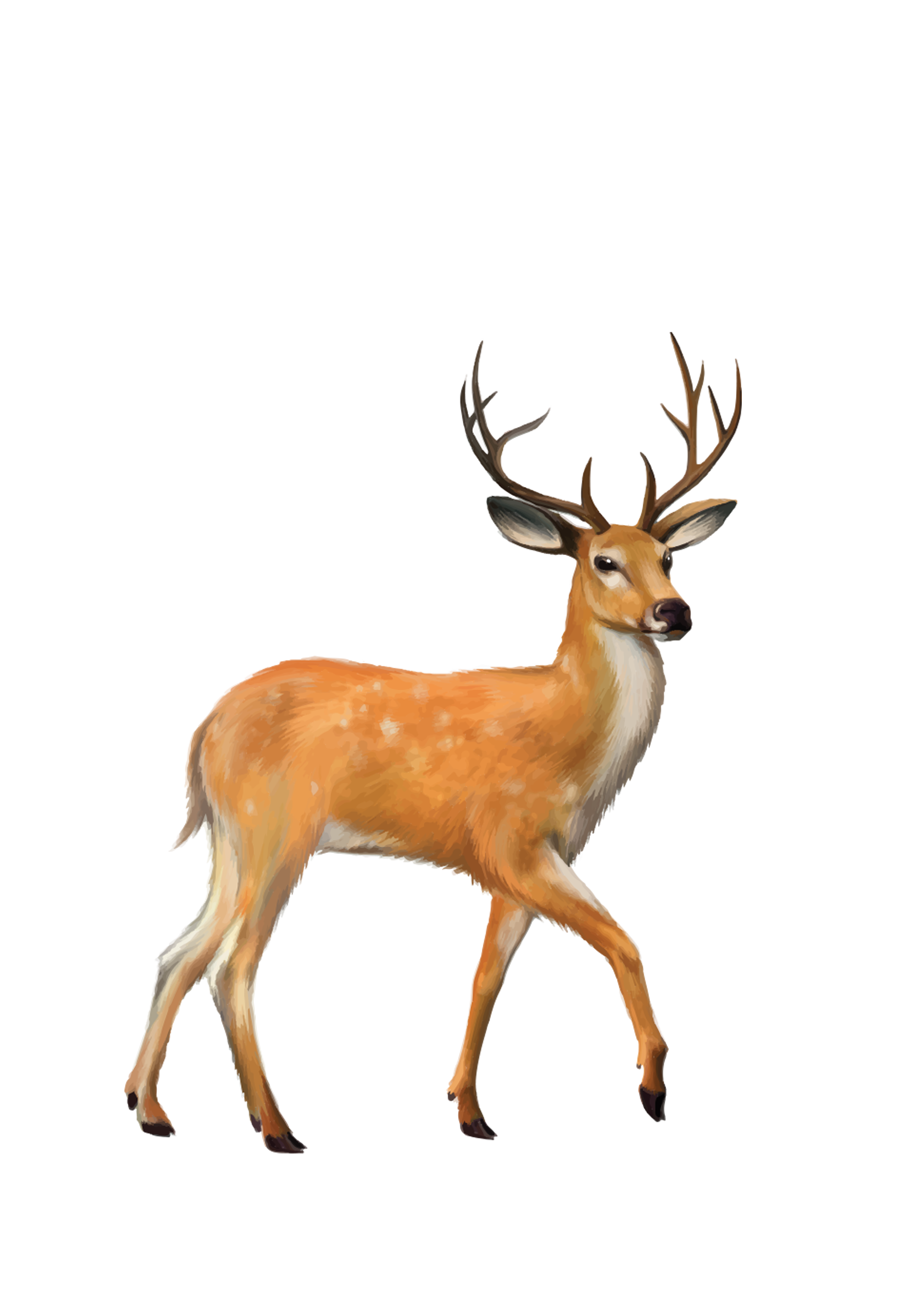 White tailed mule clip. Deer clipart whitetail deer