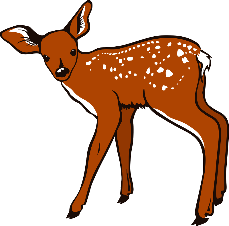 Woodland clipart fawn. Medium image png