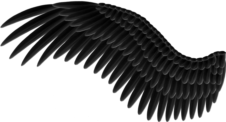 Black and white png images. Free wings download clip