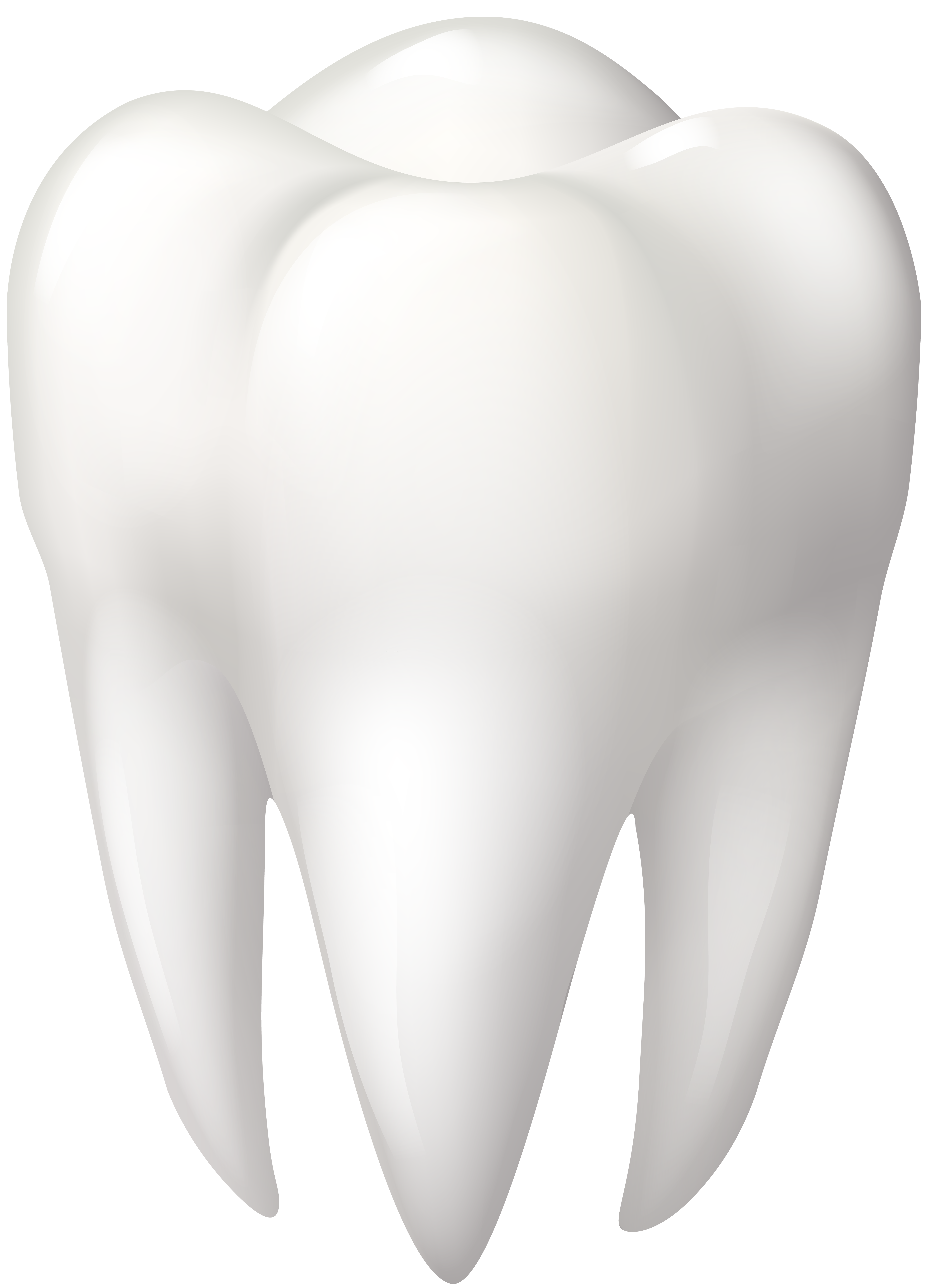 Tooth molar png clip. Dog clipart dental