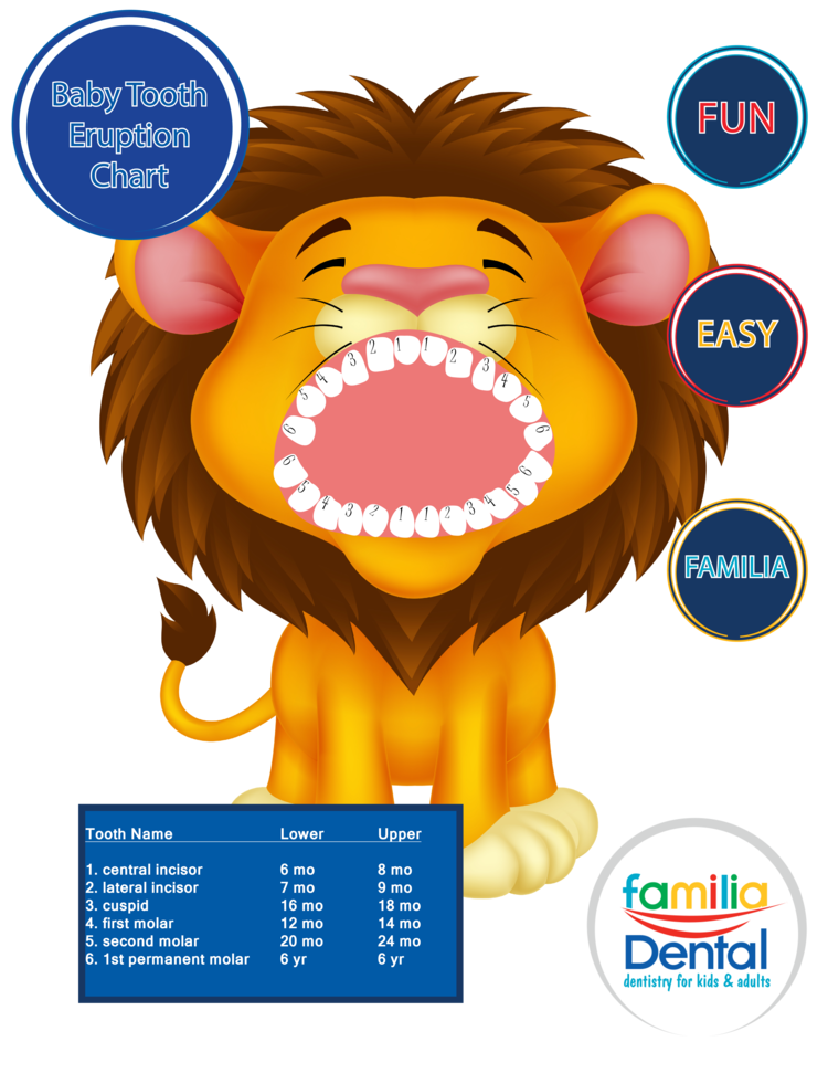 Infant clipart seven age. Baby teeth eruption chart